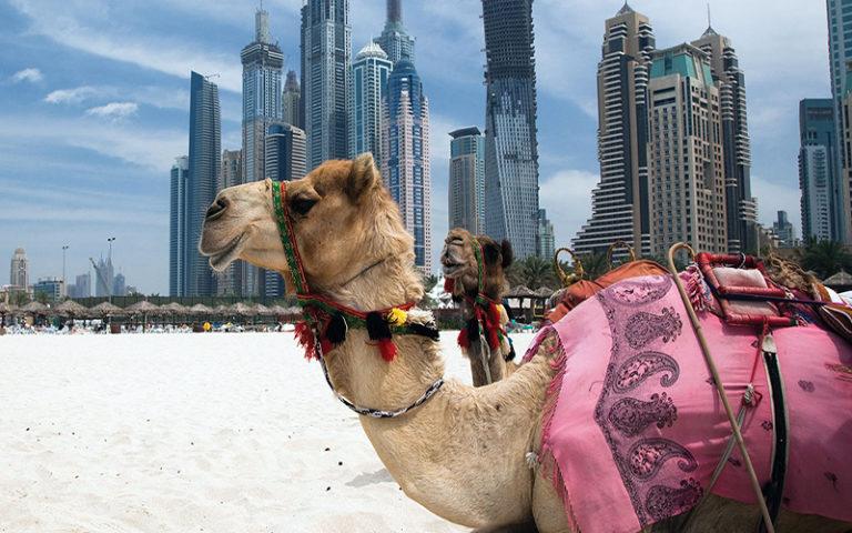 Dubai Fusion